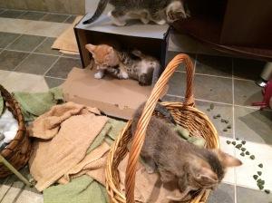 Kitten mayhem!
