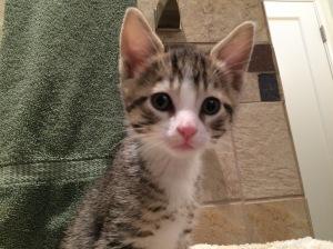 Ratticus, King of the Kitten Kingdom