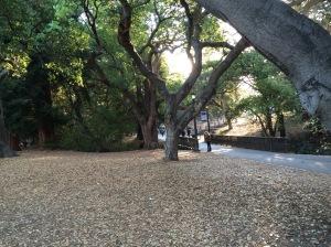 Autumn at Cal.