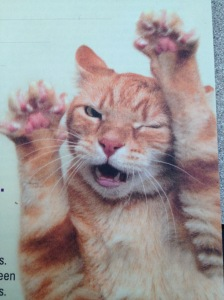 Unhappy cat.