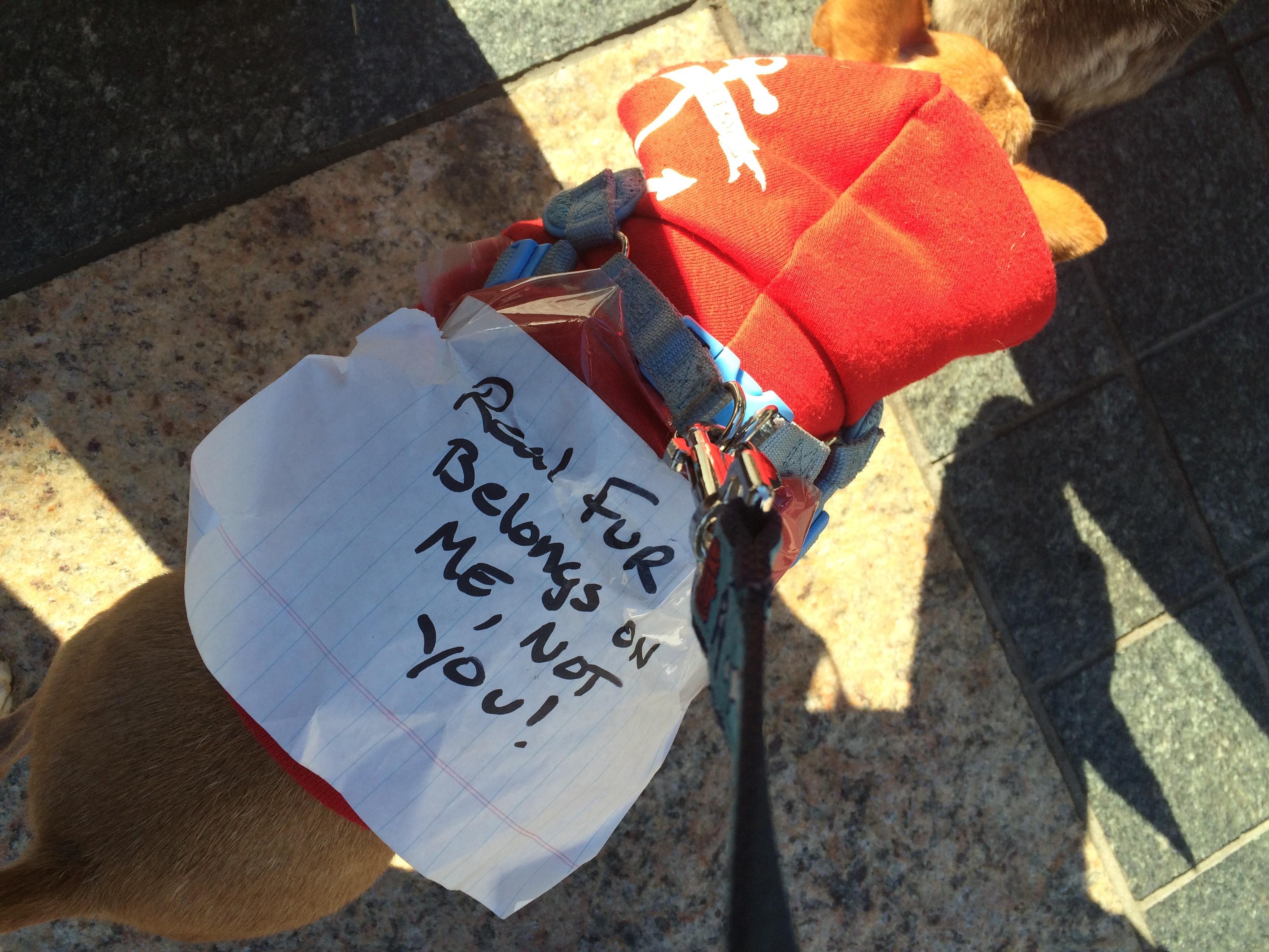 dog activist 1