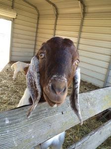 Gayatri says hello!