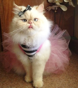 Luna the Fashion Kitty; believe me, not many cats will tolerate this.