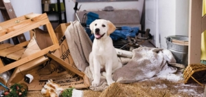 Remember the book and movie Marley and Me?