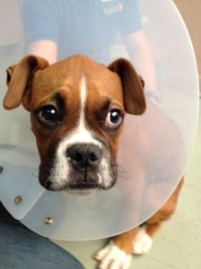 pup with cone