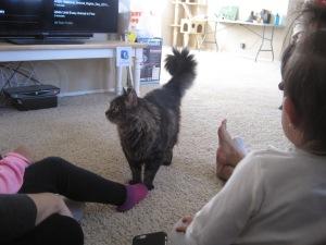 Cat Toffee (AKA Tofu) joins us.