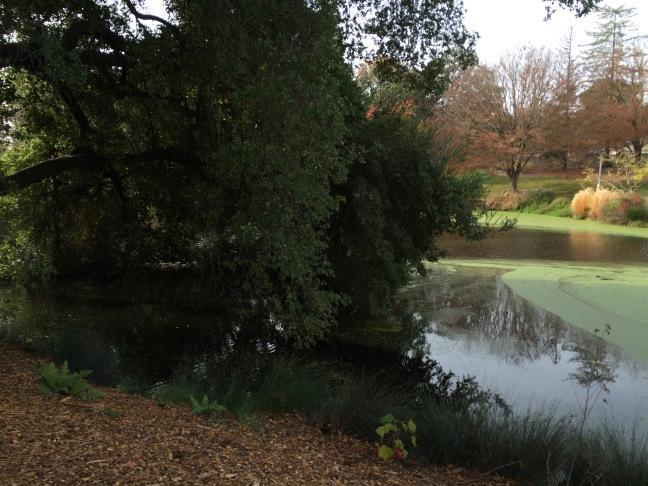arboretum 1