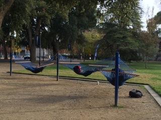 hammocks 1