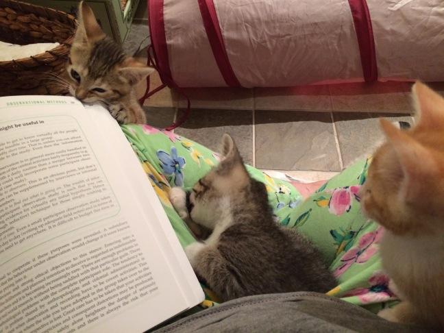 kittens studying