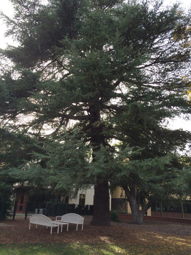 Walker tree