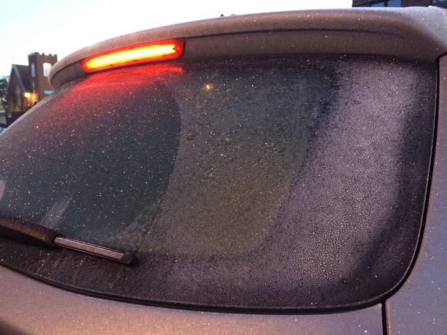 seattle frost