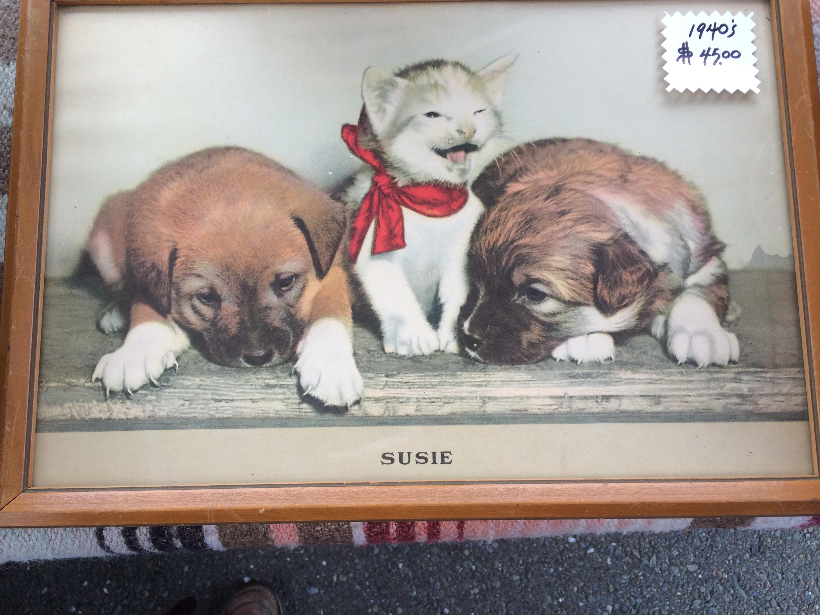 Susie kitten