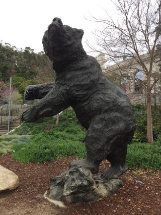 Cal bear 1