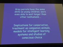 avian cognition 6