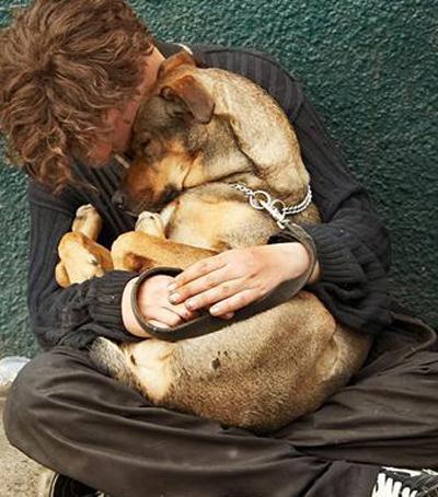 homelessvetndog400454