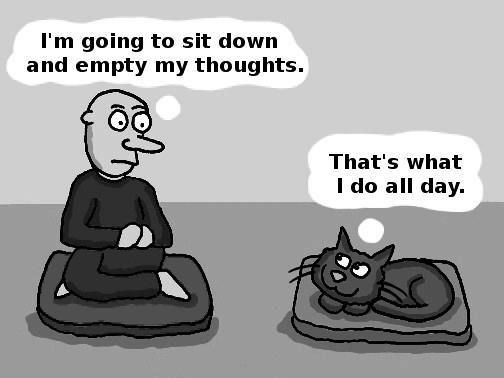 cat-mindfulness