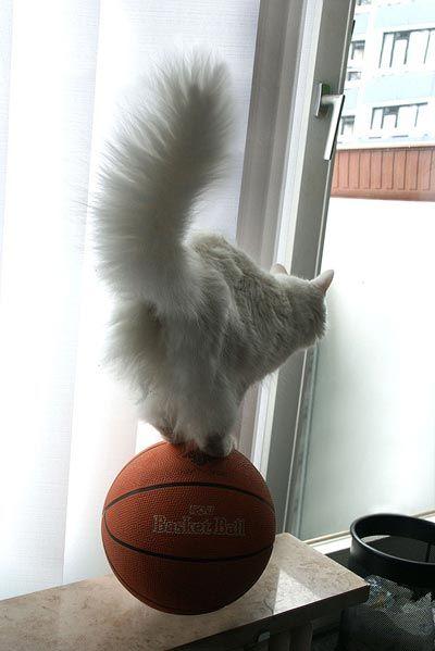 cat-balance