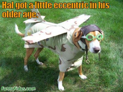 funny-dog-hal-got-eccentric.jpg
