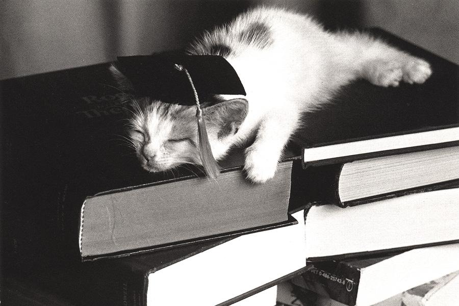 kitten-in-cap