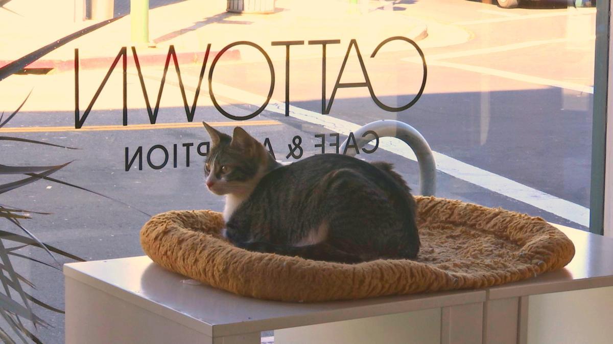 cat+town+7