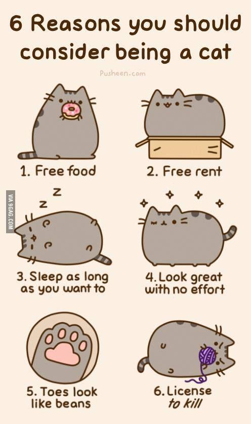 if i were a cat
