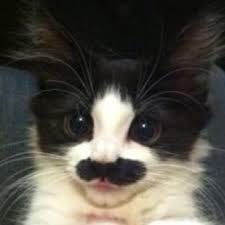 cat groucho