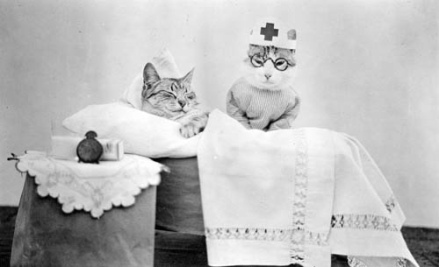 cat-patient