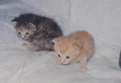 kitttens