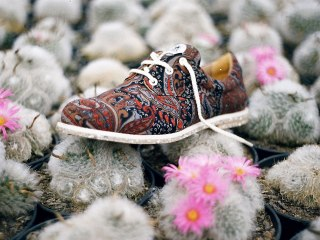 insecta-shoes-brazil-1