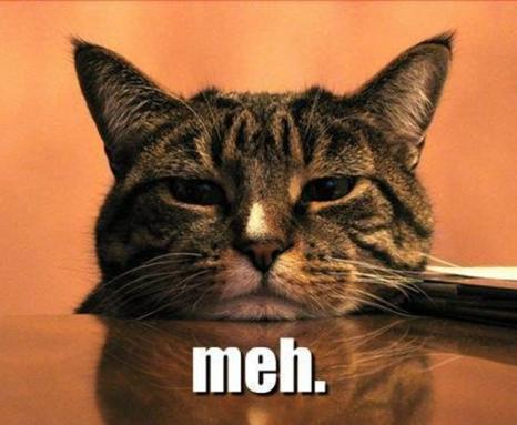 meh-cat_featured