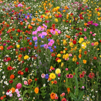 wildflower-garden-design-superhuman-wildflower-garden-23