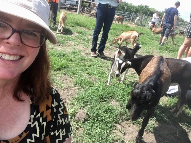 ASI_goats