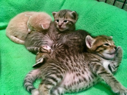 early kitten pile